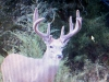 Chris' trail cam pic