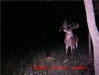 TRAIL Cam Photos